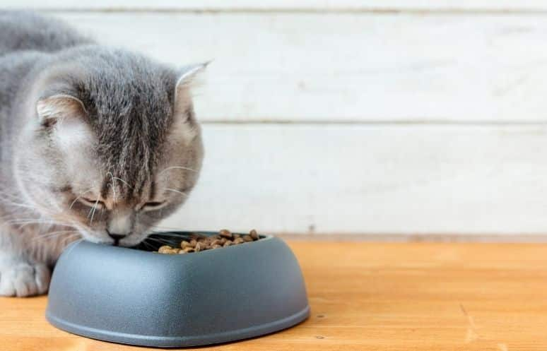 Ranking mejor comida para gato<div class='yasr-stars-title yasr-rater-stars'                           id='yasr-visitor-votes-readonly-rater-a961715079311'                           data-rating='5'                           data-rater-starsize='16'                           data-rater-postid='236676'                            data-rater-readonly='true'                           data-readonly-attribute='true'                       ></div><span class='yasr-stars-title-average'>5 (10)</span>